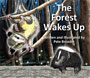 The Forest Wakes Up